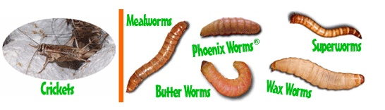 Buy crickets, mealworms, superworms, wax worms, phoenix worms, and more